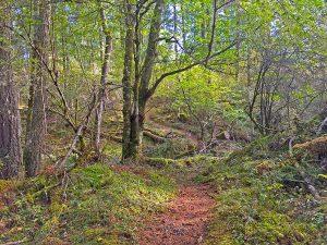 Moran Hike